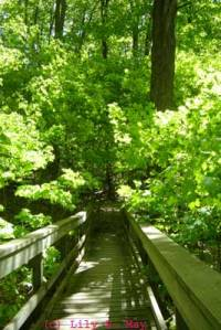 Walkway at Kortright Conservation Centre