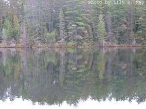 Conifers and their reflections, Algonquin Park, 2011