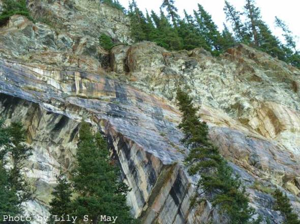 Rock Wall & Conifers, Plain of 6 Glaciers, Sept. 2012