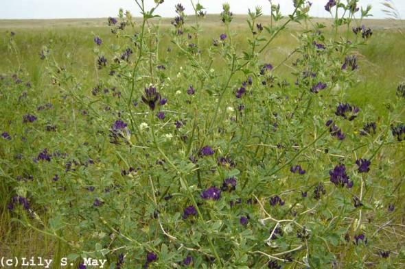 Wildflowers in grasslands
