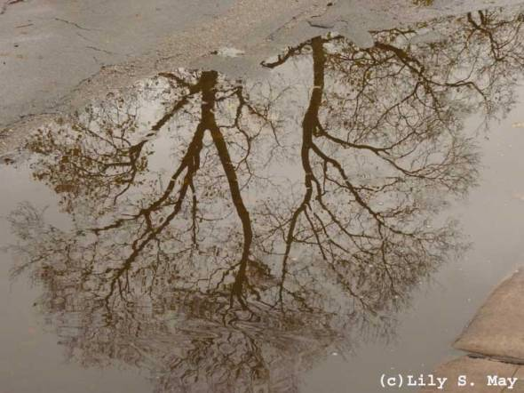 Tree Reflection, Toronto