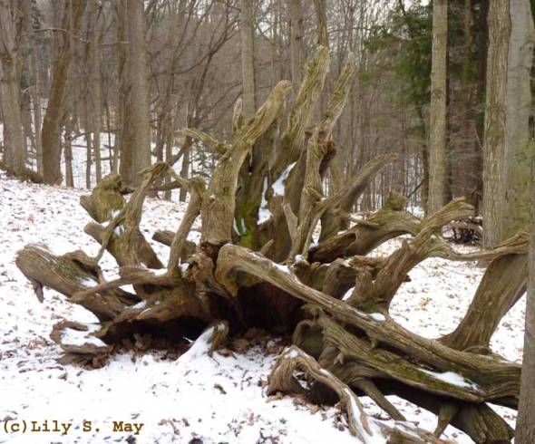 Old Roots Kortright