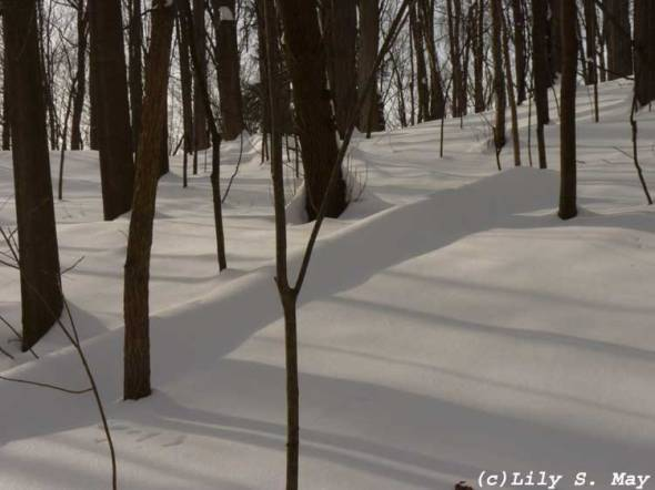 Kortright snowy woods