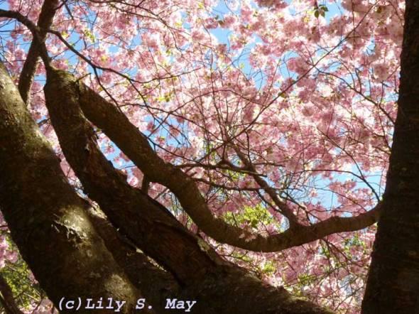 Pink Tree
