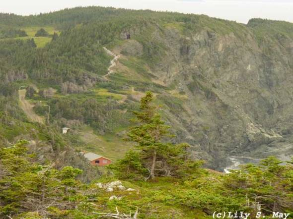 Trail in Twillingate