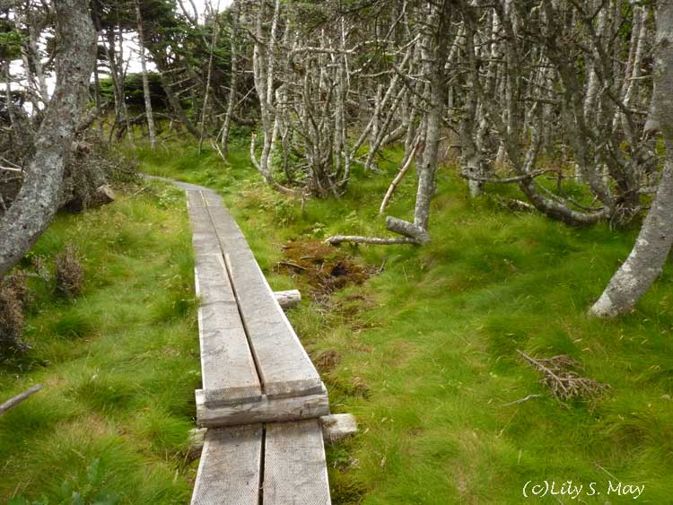 Skerwink Trail, Newfoundland | of humans and nature