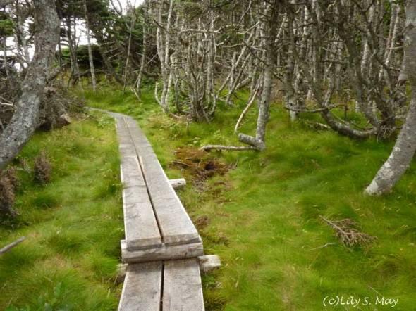 Skerwink Trail