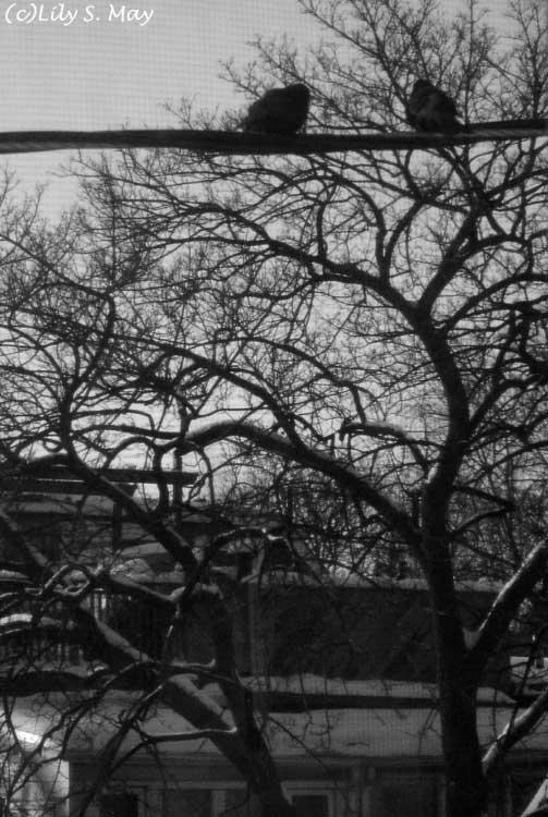 Toronto January 2009