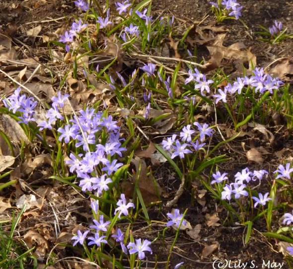 Toronto Spring 2013