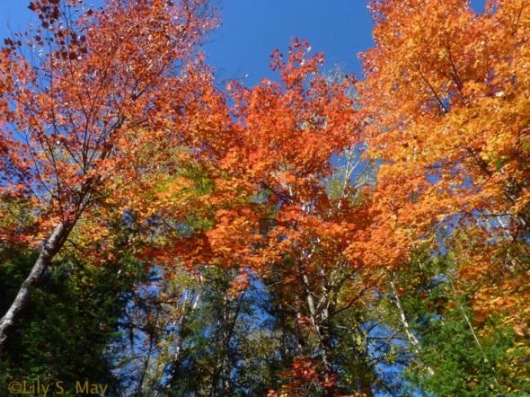 Gorgeous autumn colours, Arrowhead Provincial Park, Ontario, October 2012