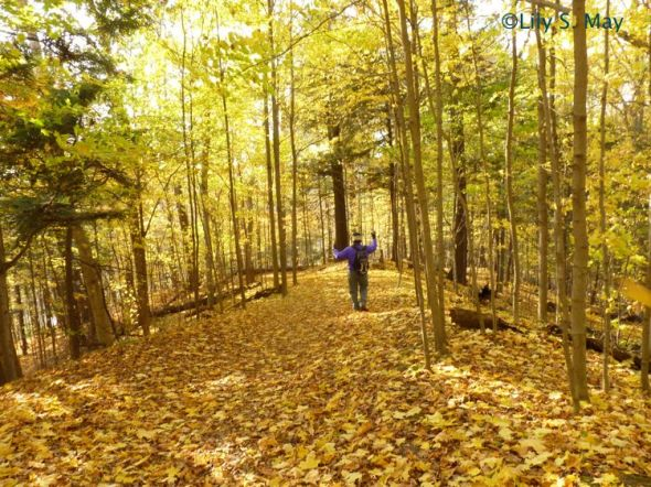 A glorious autumn day from 2011 at Kortright Conservation Centre, Ontario